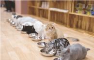 保護猫施設運営予定イメージ画像