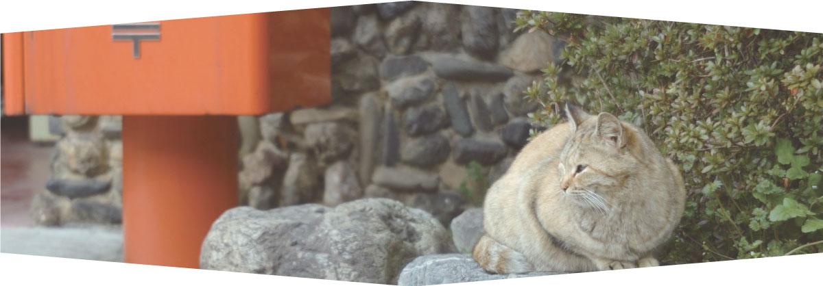 保護猫の飼育支援・相談イメージ画像